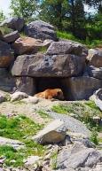 Zoo de Saint-Félicien